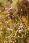 Сопутствующий аромат полевых трав передать не могу, но вот фото выложить могу.