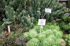 Несмотря на небольшие размеры оранжереи, коллекция растений большая и интересная.