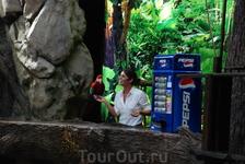 Шоу попугаев в Лоро парке.