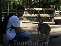 знакомство с кенгуру