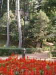 клумбы курортного парка