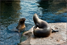 """"""" Ну, что ты тут чешешься? Там рыбу дают!"""" Очень рекомендую сходить в морской зоопарк . Он очень небольшой, но очень уютный и приятный. Там вы увидите ..."""
