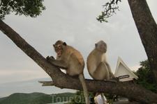 Остров обезьян...ничего хорошего в этих милых созданиях я не увидела..