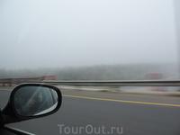 Туман в то утро стоял аж до Луги