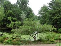 Дальше мы идем в одно из моих самых любимых мест - в Сент-Джеймс парк.