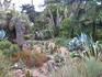 Кактусы... Всегда думала, что растут они в пустыне, но видимо им совсем неплохо на берегу Средиземного моря, где влажность гораздо выше, чем в пустыне ...