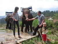 Угостить слоников сахарным тростником