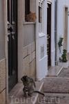 Коты в старой части города Албуфейры.
