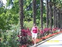 Аллея Никитского ботанического сада.