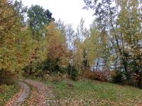 Осень – она не спросит, Осень – она придёт. Осень – немым вопросом В синих глазах замрёт. Осень дождями ляжет, Листьями заметёт... По опустевшим пляжам Медленно ...