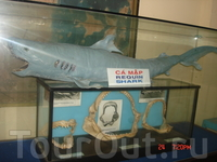 В музее института океанографии представлено большое количество препарированных морских обитателей