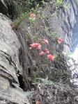 и на камнях растут цветочки