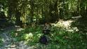 По дороге на Солох-Аул довольно дремучий и красивый лес