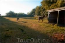 Появившуюся 60 миллионов лет назад первую лошадь зоологи назвали Эогиппус (Лошадь Рассвета).