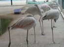 эти фламинго выглядят живее, чем в ростовском ззпарке