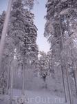 Волшебный лес вдоль трасс