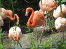 Лето в Германии. Лейпцигский зоопарк