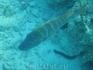рыба длиною в метр-полтора ... и какая то змея