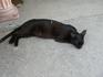 Кошка из гончарной мастерской