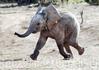 И слоники тоже...