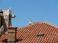 Там все-все крыши такие! Так все аккуратно!