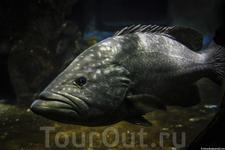 Милая рыба