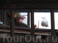Важная птица =)