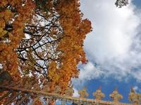 Ярко светило солнышко, подсвечивая листву