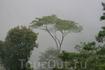 Внизу - те же джунгли и тот же дождь.