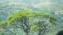 а это ТО дерево,которых были миллионы на Крите.Осталось почти ничего.Это индивидуум.Как называется-не спрашивайте,не знаю.