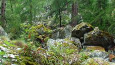 Лесная туристическая тропа Herbriggen-Zermatt