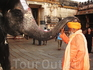 Священный слон даёт благословение в храме!