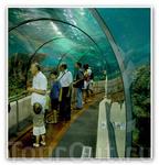 Океанариум - подводный туннель. У испанцев называется &quotАквариум&quot