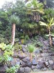 Ну вот наконец и сам сад. Пальмы как будто растут из каменной стены.