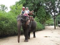 катаемся на слонах