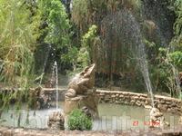 Один из парков в Далате - сосновый лес, газоны, небольшой водопад, канатная дорога