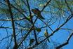Красивые и живущие прямо в городе, в гнездах на пальмах. Грубо говоря, везде где есть пальмы — есть и попугаи. Они там, как голуби или у нас воробьи.Они ...
