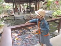 В следующие дни мы кормили разноцветных рыб в местном пруду