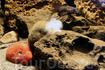 подводный мир Атлантического парка Олесунда