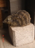 чудный каменный ёж! как живой