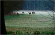 Хотя я верю, что когда то они здесь были. Этот снимок был сделан в марте 2011 здесь же в  Северном Брабанте, примерно в 40 км. Рано утром эти животные ...
