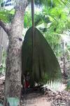 Вообще Майская долина- это прекрасный пальмовый лес, в котором проложено несколько пешеходных маршрутов. По легенде именно Майская долина и есть тот самый ...