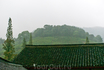 Ханчжоу славится на всю страну особым сортом – Лунцзин, или Колодец Дракона. Сбором урожая занимаются в основном женщины. С каждой ветки они срывают только ...