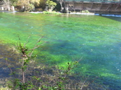 такой цвет воды только в Фонтэн-де-Воклюзе!