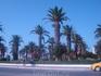Прекрасные пальмы