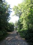 от бывшей усадьбы Петровское остался только запущенный парк...