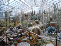 Нимфенбург. Ботанический сад. В оранжерее