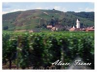 по всемирно известной Дороге Вина - Route de Vins