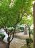 Мандариновое дерево. Внутренний дворик в Картезианском монастыре в Вальдемоссе