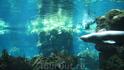 большие рыбы=))